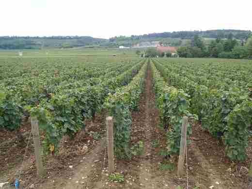10 Cestou do Beaune